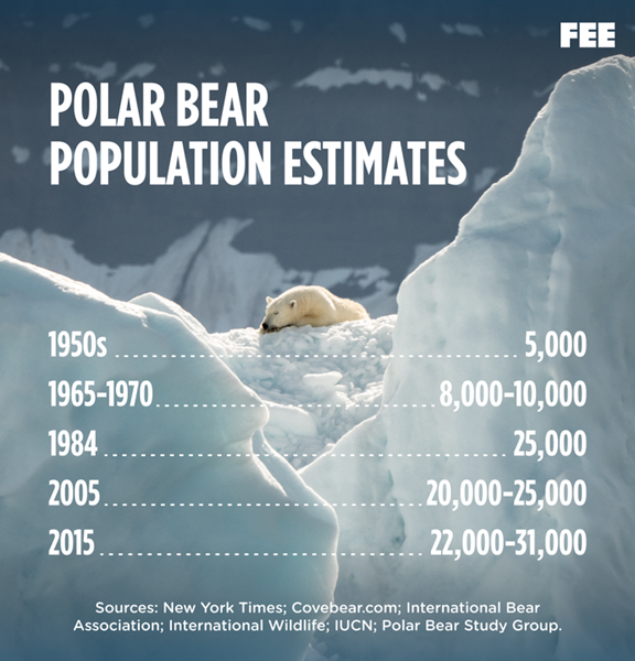 Polar Bear Extinctions Population